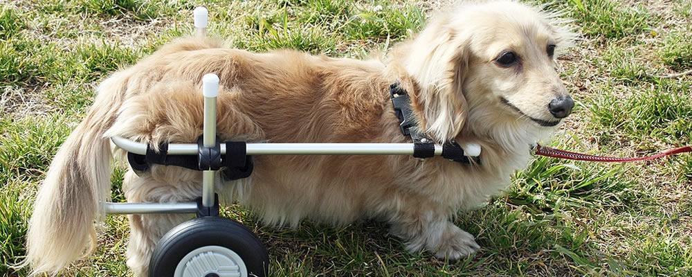 わんワーク犬用犬用歩行器(犬用車椅子)装着イメージ
